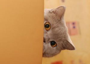 зачем подглядываешь?