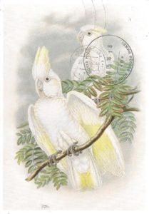 соломонский какаду
