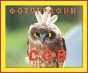 photos of owls