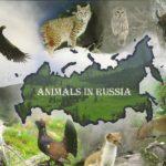 http://nizhniy-novgorod.regmarkets.ru/