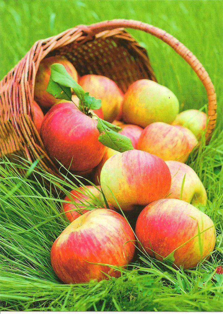 открытка яблоки