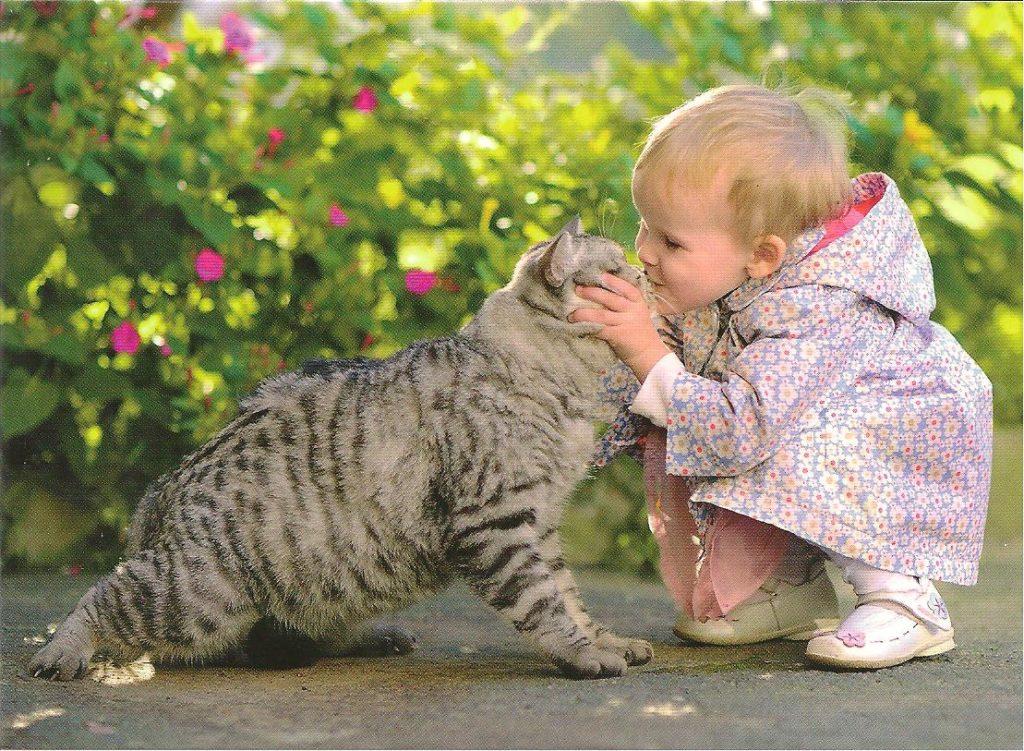 котики и детки